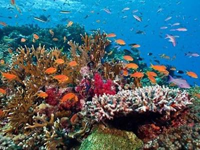 Hawai'i's Reefs