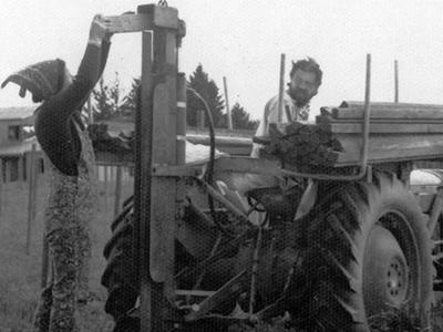 Oregon's Wine & Beer Pioneers: A conversation with Dick & Nancy Ponzi, founders of Ponzi Vineyards (1970) and BridgePort Brewing (1984)