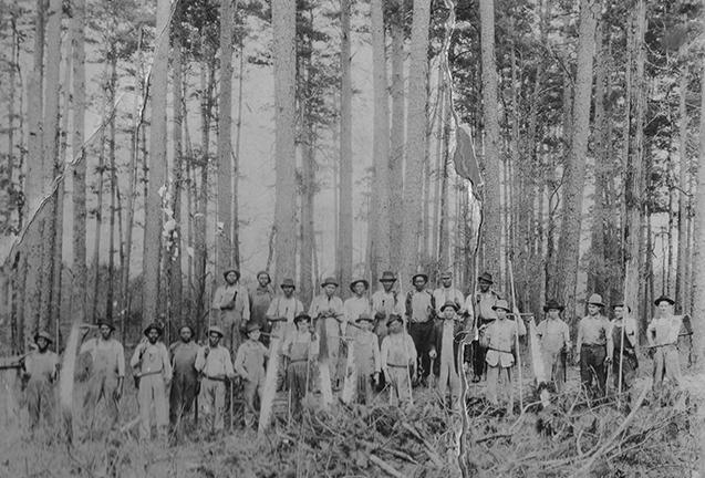 Timber Culture