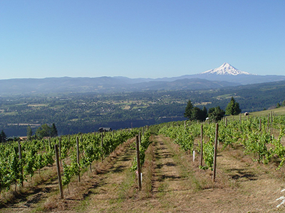 The Dynamic Terroir of the Willamette Valley: The Relationship between Geology, Soil, Climate and Wine