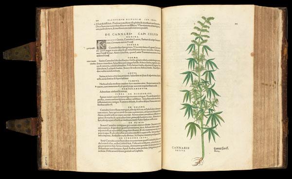 Cannabiscadia