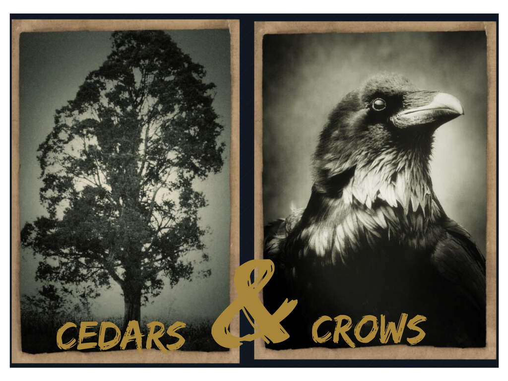 Cedars & Crows