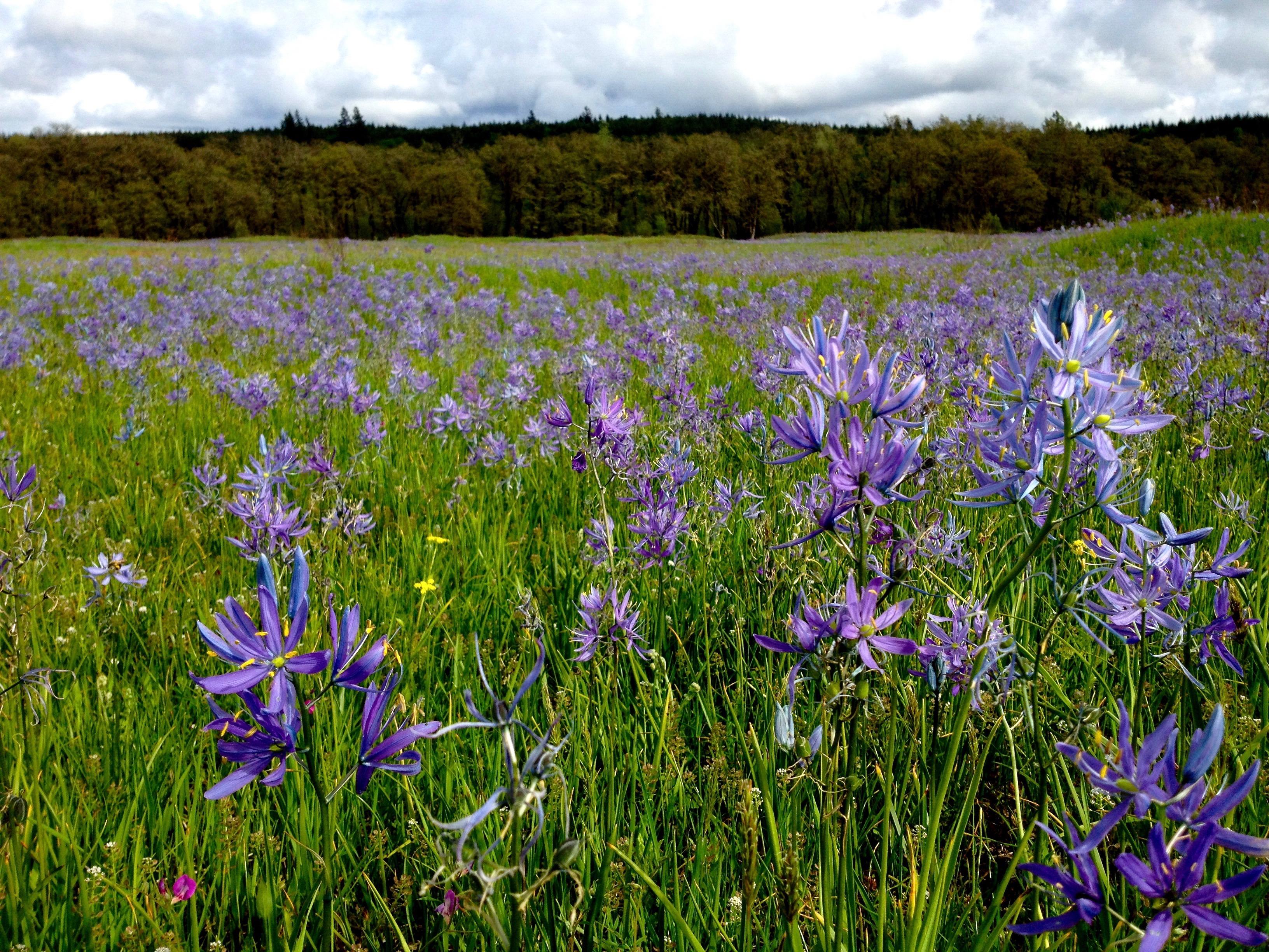 Hidden Prairies of the Pacific Northwest
