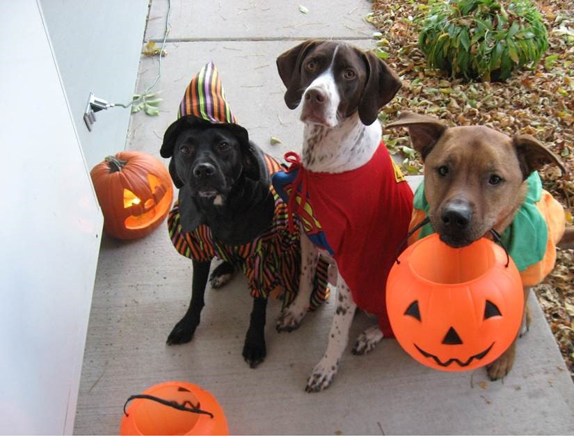 Oakshire Halloween Party and Doggy Costume Contest