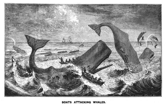 Whaling the Pacific World: An Unprecedented Adventure